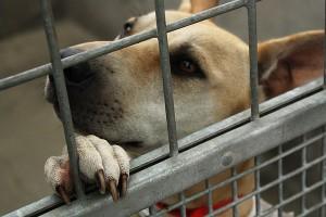 Dog Shelter Data Logger